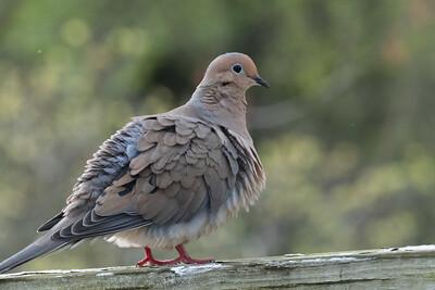 birdfeeder-7300