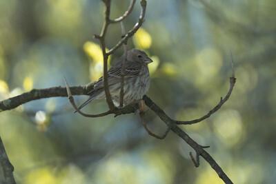 birdfeeder-7058