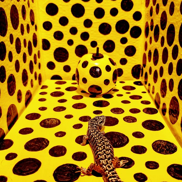 A Kusama room for The Reptile (Valeran Lothaniel)