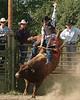 sedro rodeo110p