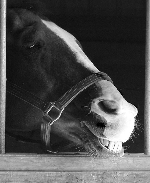 horse smile sox