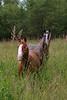 Ponies bambi6-05024