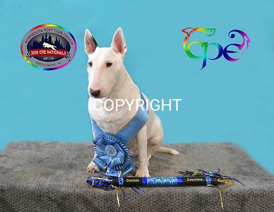 glorydogs (13 of 16)