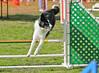 PJ_Pupp_Jumpers_L345C_Sat-8562