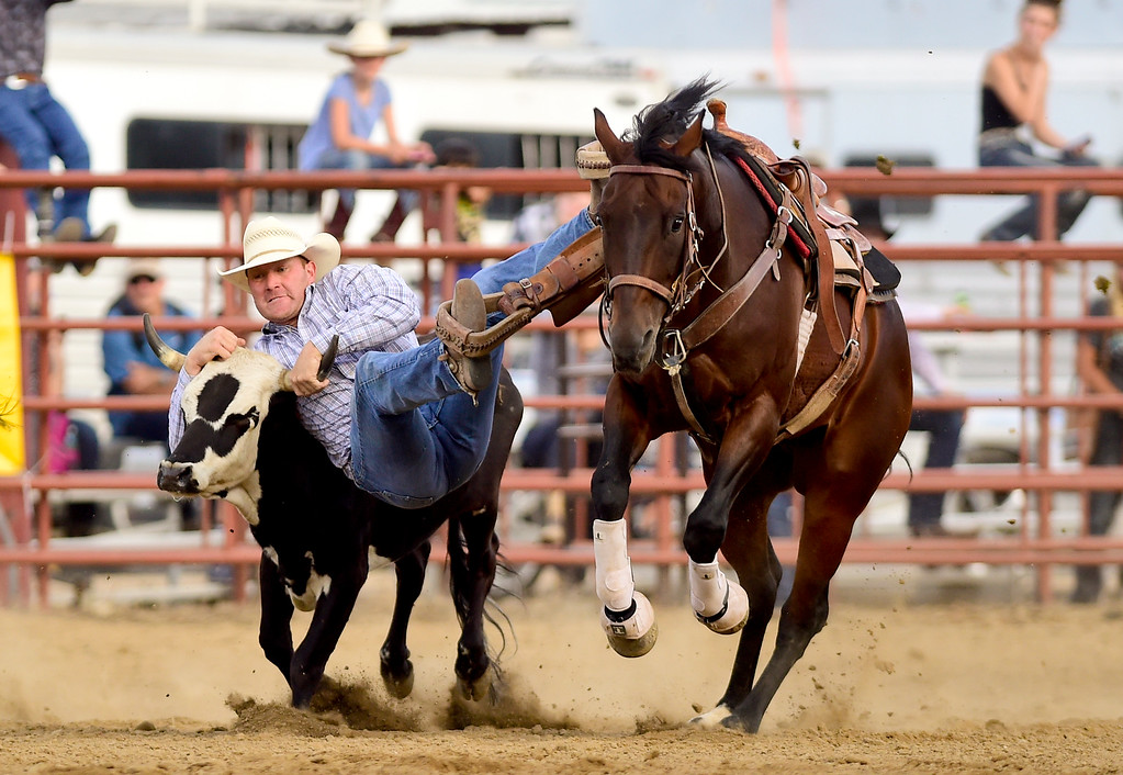 . LONGMONT, CO - AUGUST 5: Steer Wrestler Kyle Broce, La Junta, jumps from his horse during the CPRA rodeo at the Boulder County Fair on Aug. 5, 2018.  (Photo by Matthew Jonas/Staff Photographer)