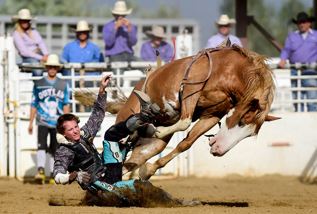 . LONGMONT, CO - AUGUST 5: Bareback Rider Chance Ogden, of Laramie, Wyoming, gets thrown from his horse during the CPRA rodeo at the Boulder County Fair on Aug. 5, 2018.  (Photo by Matthew Jonas/Staff Photographer)