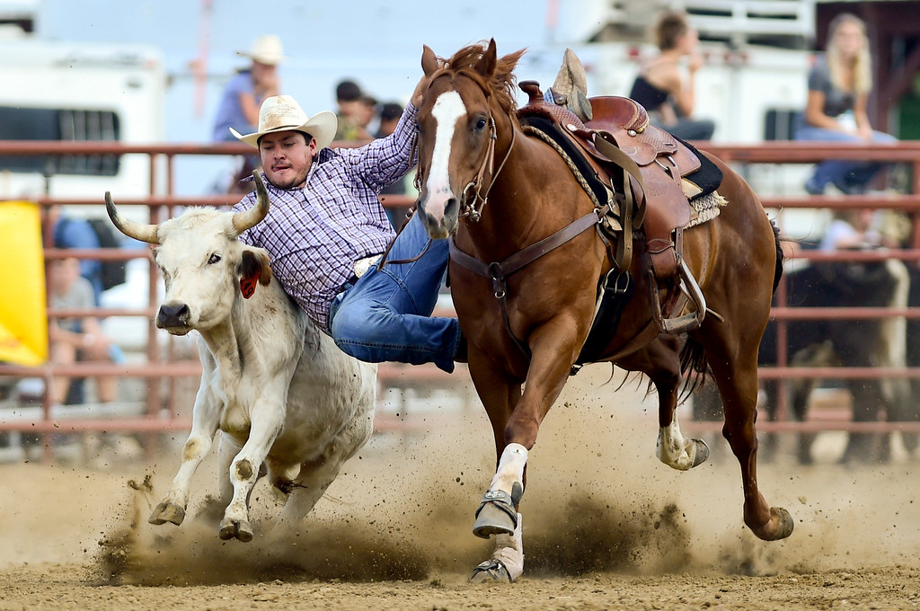 . LONGMONT, CO - AUGUST 5: Steer Wrestler Daniel Joos, La Junta, jumps from his horse during the CPRA rodeo at the Boulder County Fair on Aug. 5, 2018.  (Photo by Matthew Jonas/Staff Photographer)