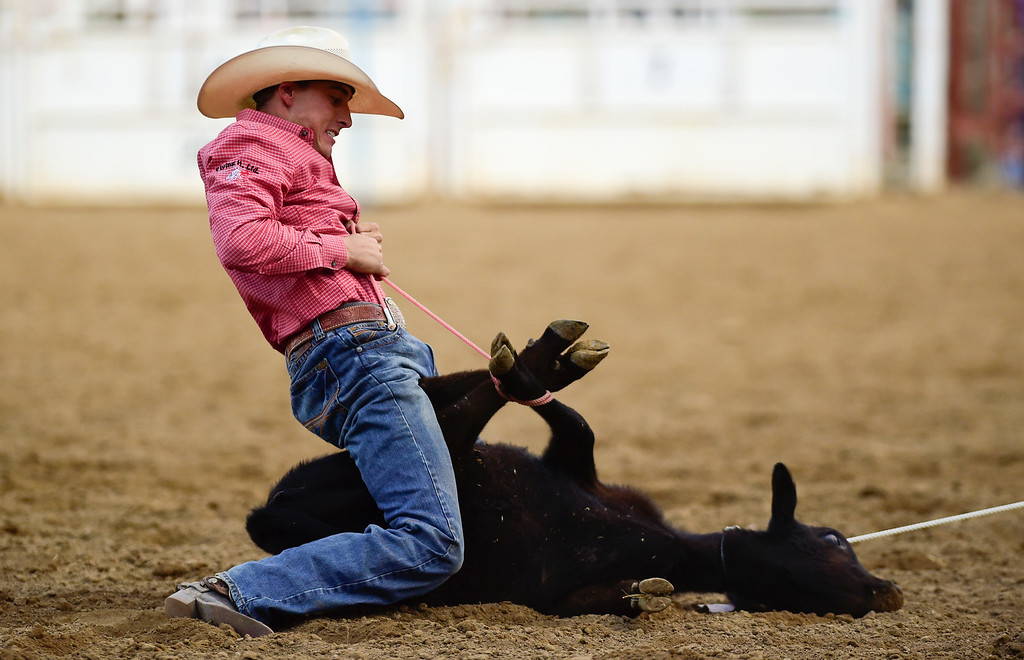 . LONGMONT, CO - AUGUST 5: Tie-Down Roper Devon Burris, of Queen Creek, Arizona, ties down a calf during the CPRA rodeo at the Boulder County Fair on Aug. 5, 2018.  (Photo by Matthew Jonas/Staff Photographer)