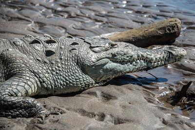 06—Jungle Crocodile Safari