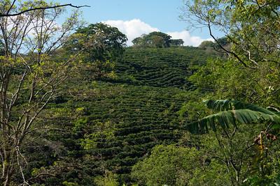 02—Coffee Plantation Tour