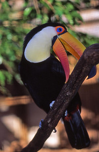 Toucan Do It