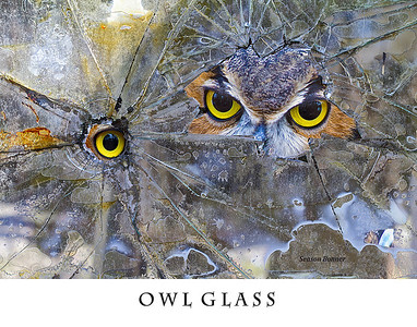 Owl Glass