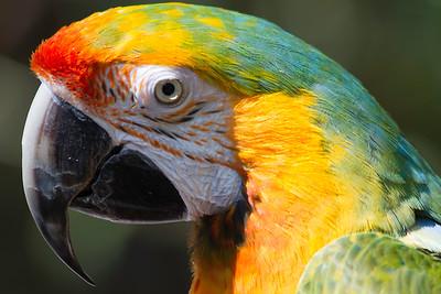 Parrot_9998
