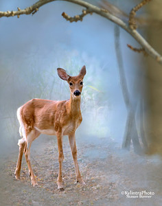 Deer in fog_54126