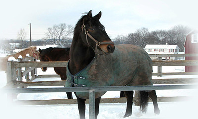 Horses 333