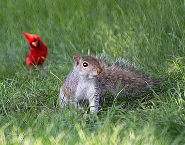 Cardinal and Squirrel 294