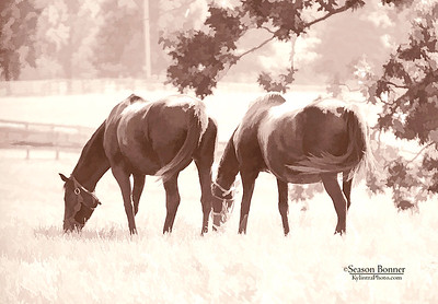 2 horses-1738s