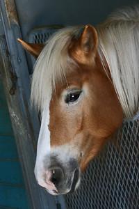 Floridian Horse 296