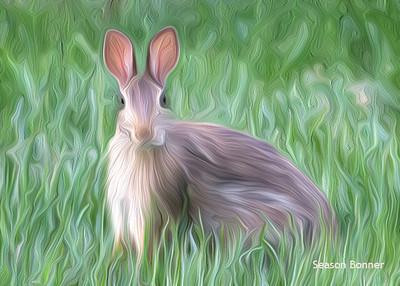 Fine Rabbit 752