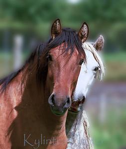 Royal Horses 932