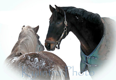 Horses in the Snow 263