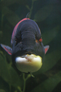 CrSeaFish2070603-3