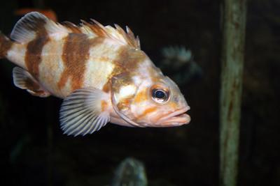 CrSeaFish2060613-7