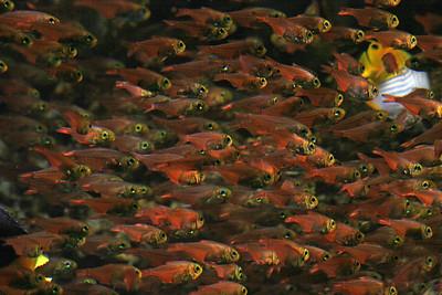 CrSeaFish2061015-43