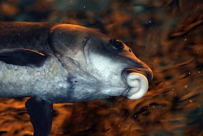 CrSeaFish2061015-06