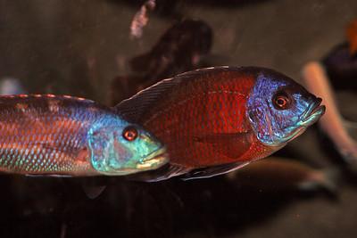 CrSeaFish2061015-30