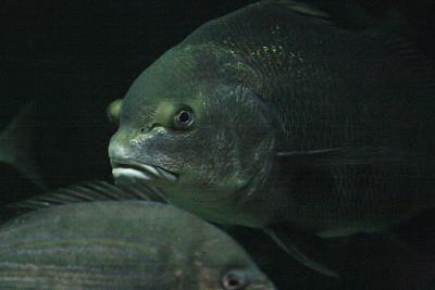 CrSeaFish2070603-1