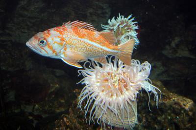 CrSeaFish2060613-5