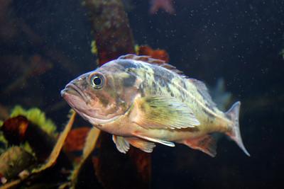 CrSeaFish2060613-6