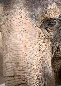 elephand-1877