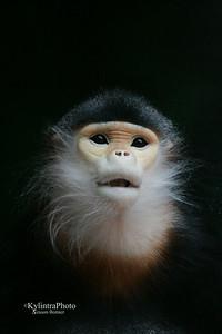 Monkey 178
