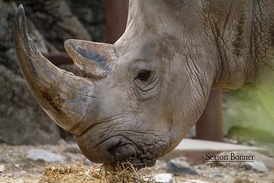 Rhino-6154