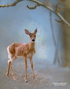 Deer in fog_4126