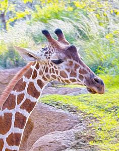 Giraffe Contemplating 427
