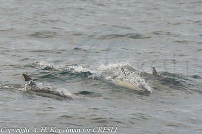 2013-07-21-Montauk-Whale Watch