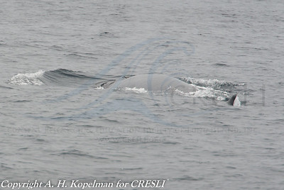 2013-07-28-Montauk-Whale Watch
