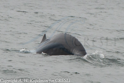2014-08-03-Montauk-Whale-Watch