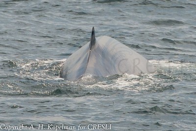 2014-08-06-Montauk-Whale-Watch