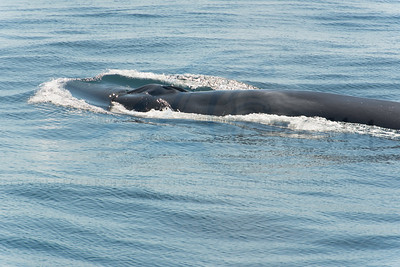 2015-08-02-Montauk-Whale-Watch