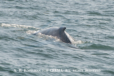 2015-08-30-Montauk-Whale-Watch