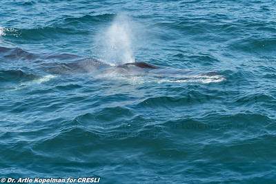 2017-07-02-Montauk-Whale-Watch