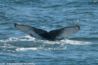 2017-08-20-Montauk-Whale-Watch