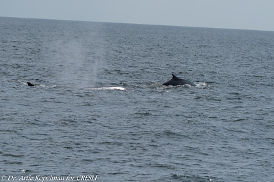 Finback mom and calf
