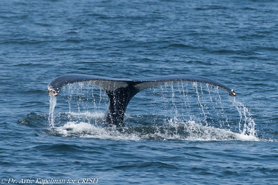 2018-08-08-Montauk-Whale-Watch