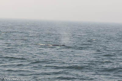 2018-08-29-Montauk-Whale-Watch