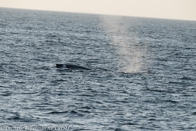 2018-09-02-Montauk-Whale-Watch